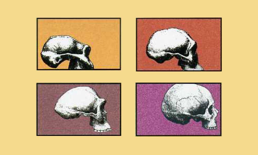 Evolución y Cognición