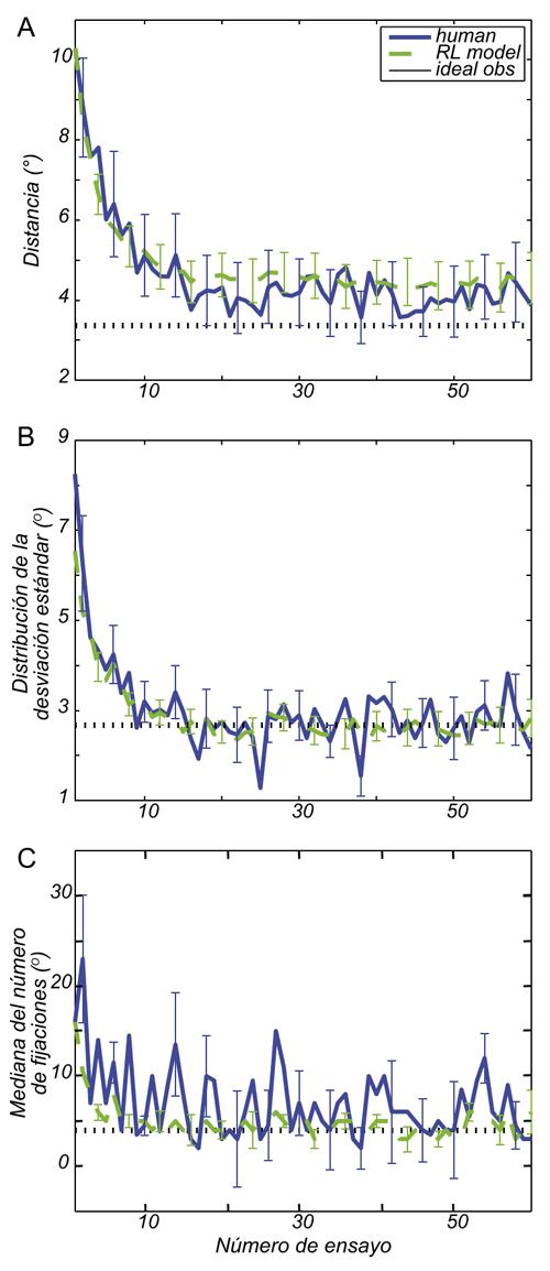 """FIGURA 2. Curvas de aprendizaje para la tarea de búsqueda de objetivo oculto. (A) Se muestra en azul y verde la distancia entre la media del conjunto (cluster) de fijación para cada ensayo para el centroide del objetivo, promediado entre los participantes, e indica el resultado de las 200 simulaciones del modelo de aprendizaje por reforzamiento para los parámetros de cada participante. El MES [modelos de ecuaciones estructurales] se da para ambos. La predicción de observador ideal se indica por la línea punteada negra. (B) La DE de las distribuciones de la posición del ojo o """"extensión de la búsqueda"""" se muestra para el promedio de todos los participantes (azul) y para el modelo AR (verde) con MES. La línea discontinua es el óptimo teórico del observador ideal en cada caso, asumiendo un conocimiento perfecto de la distribución del objetivo. (C) La mediana del número de fijaciones que se llevan a cabo para encontrar el objetivo en cada ensayo se muestra (azul) junto con la predicción del modelo AR (verde) del número de fijación. El MES se muestra para ambos."""